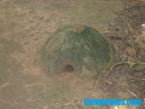 Túneles de Cu Chi en Vietnam 2