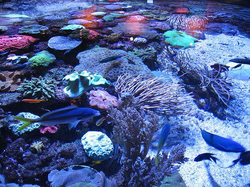 La Costa del Coral en Australia 1