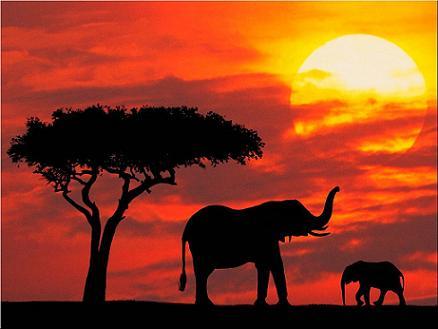 De safari por Kenya 1