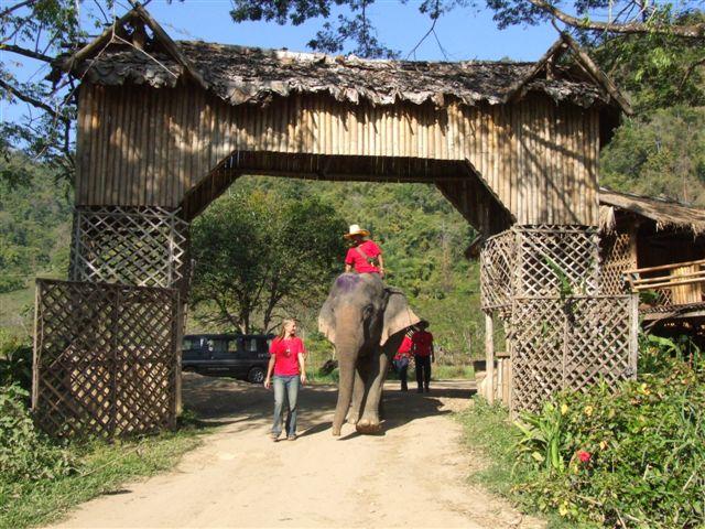 El Parque Natural de los Elefantes en Tailandia 3