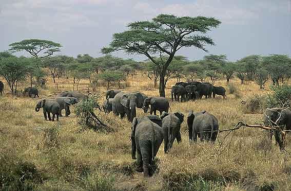 Diez destinos inolvidables en el continente africano