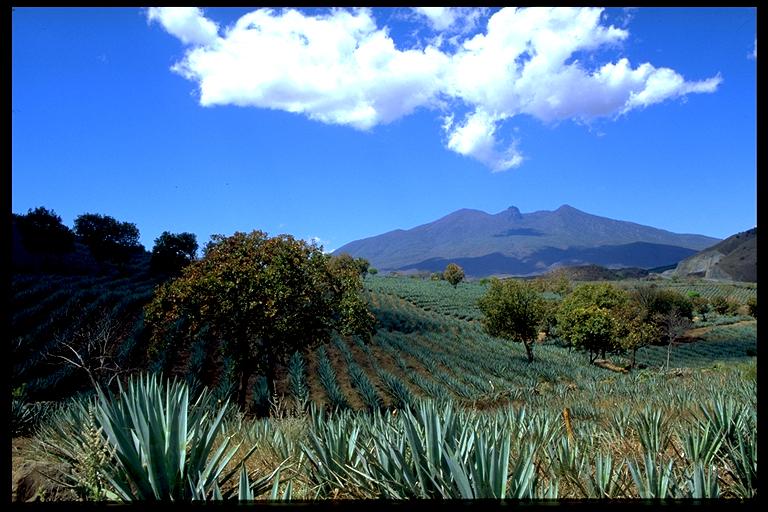 Un paseo por el cráter del volcán Tequila en México