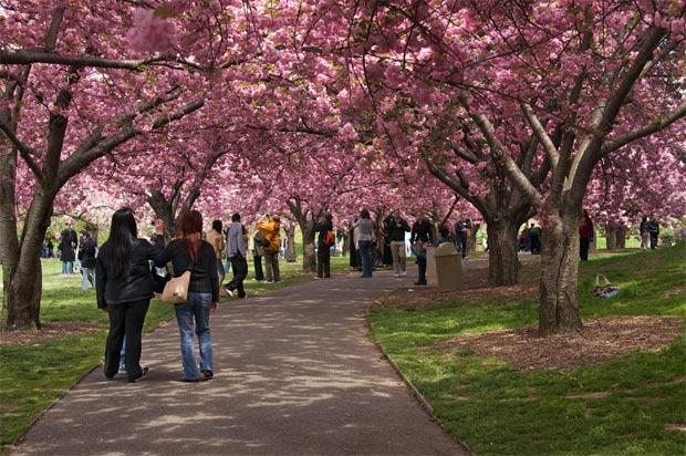 Visita Nueva York en el mes de abril 1