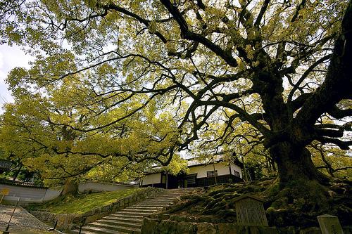 Una visita a Japón 5