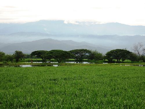 El Valle del Cauca en Cali, Colombia 1