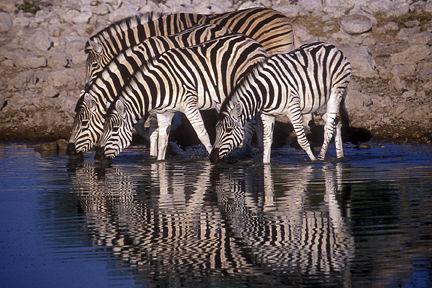 Recomendaciones para ir de safari por el Parque Nacional Etosha 5