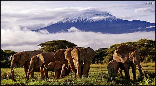 El Parque Nacional del Kilimanjaro en Tanzania 12