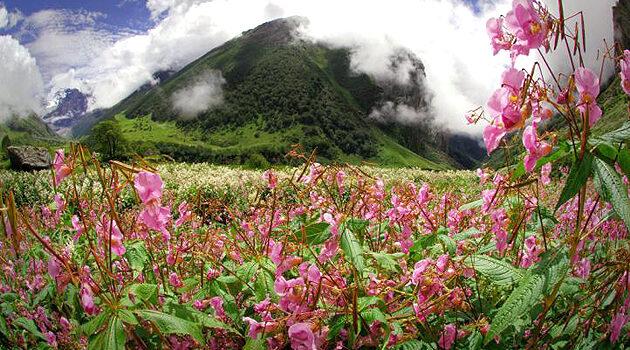 Aventura en el Valle de las Flores en la India 11