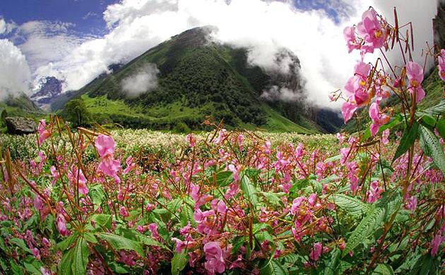 Aventura en el Valle de las Flores en la India