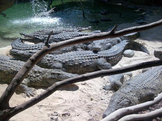 Zoo de Fuengirola