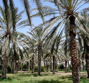 El Desierto del Sáhara en Túnez 2