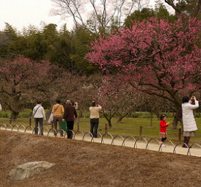 Viajar a Japón en primavera 2