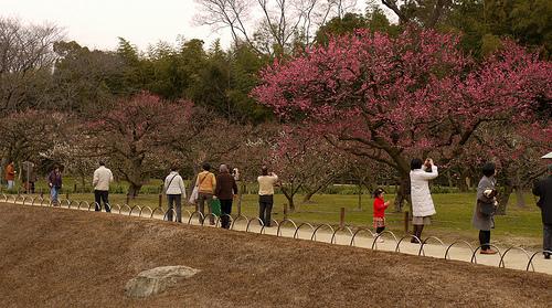 Japon en primavera