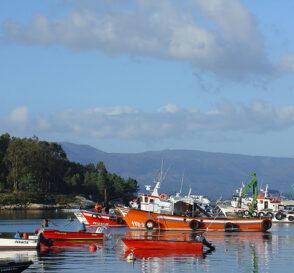 A Illa de Arousa, paraíso del mariscador 2