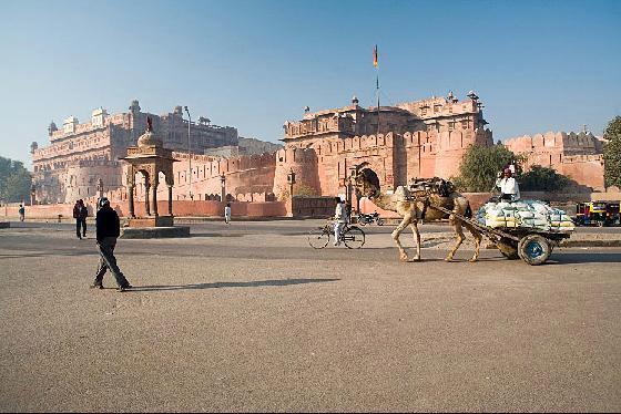 Bikaner, la ciudad de los camellos en la India