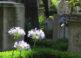 El Cementerio de los Artistas y Poetas en Roma 3
