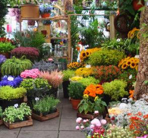 El Mercado de las Flores en Amsterdam 4