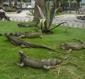 El Parque de las Iguanas en Guayaquil 2