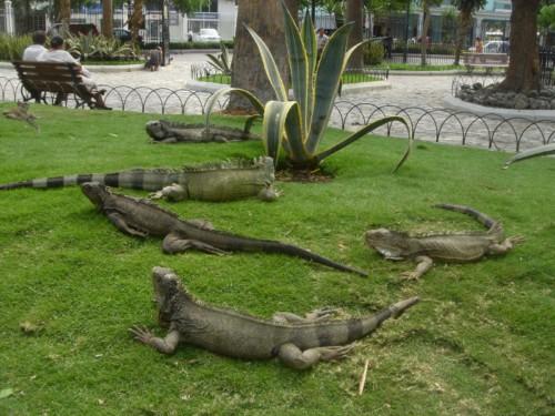 El Parque de las Iguanas en Guayaquil 1