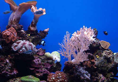 Palma Aquarium en Mallorca 13