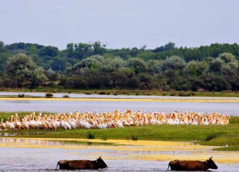 El Delta del Danubio, un paraíso de la naturaleza 4