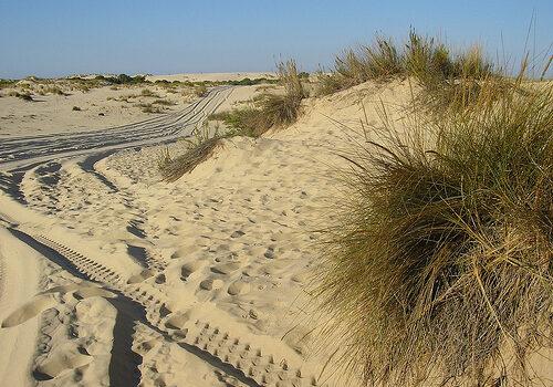 Parque Dunar en Matalascañas y Doñana 5