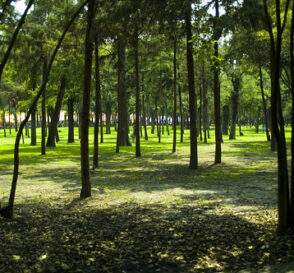 Bosque de Chapultepec, la zona cultural de Mexico DF 3