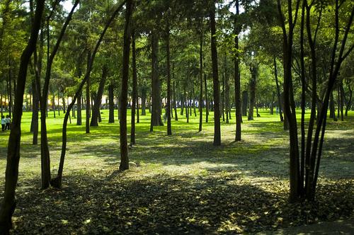 Bosque de Chapultepec, la zona cultural de Mexico DF 1