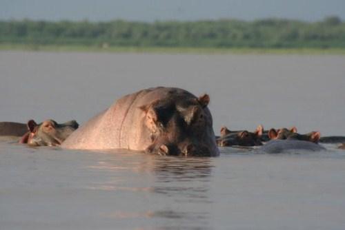 El Lago Baringo, naturaleza salvaje en Kenia 1