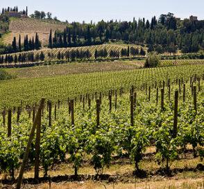 Florencia y la comarca del Chianti 3
