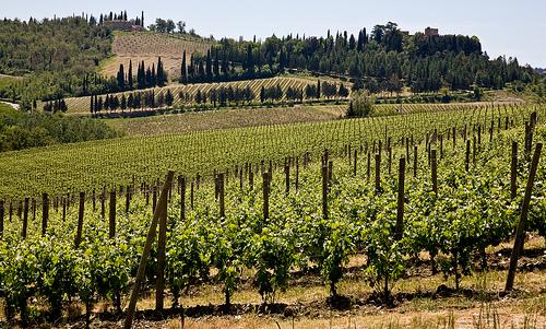 Florencia y la comarca del Chianti 11
