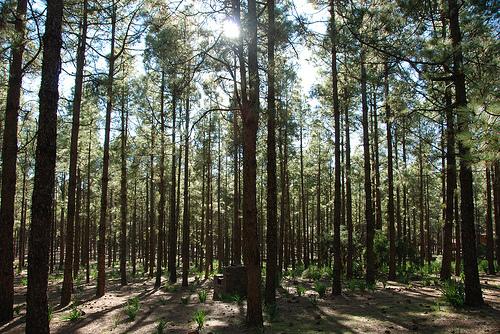 Naturaleza salvaje en Gran Canaria 1