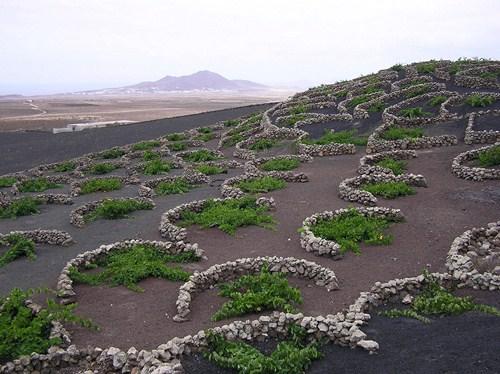 La Geria, paisaje pintoresco en Lanzarote