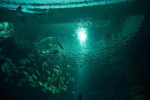 Aquarium en París