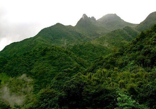 El Yunque, bosque nacional en Puerto Rico 3