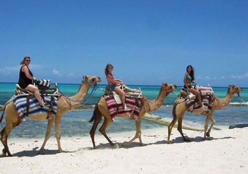 Camel Safari, paseos en camello en la Riviera Maya 1