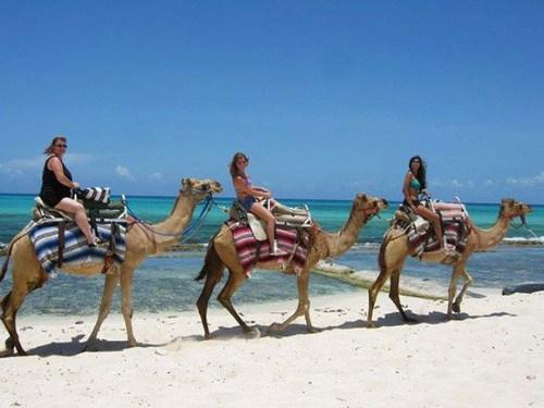 Camel Safari, paseos en camello en la Riviera Maya