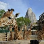 El Zoológico de París abre de nuevo sus puertas