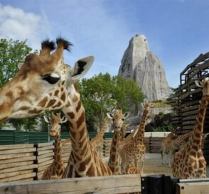 El Zoológico de París abre de nuevo sus puertas 1