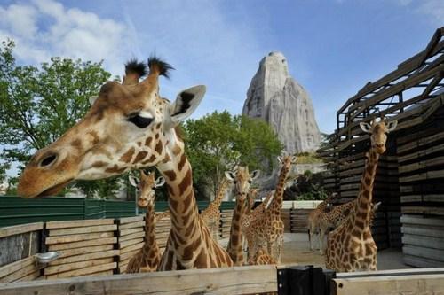 El Zoológico de París abre de nuevo sus puertas 2