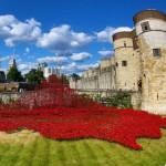 La Torre de Londres se llena de amapolas rojas