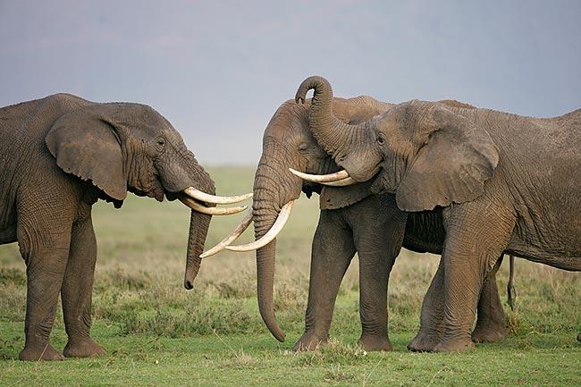 Viajar con niños a África, una experiencia aconsejable 6