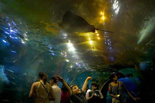 Visita el Aquarium de Donostia en San Sebastián 1