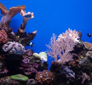 Palma Aquarium en Mallorca 2