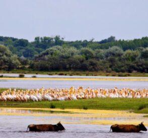 El Delta del Danubio, un paraíso de la naturaleza 1