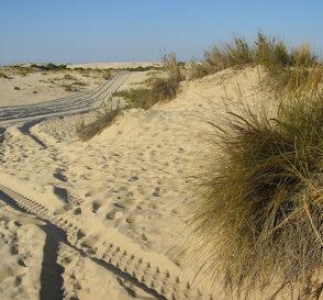 Parque Dunar en Matalascañas y Doñana 1