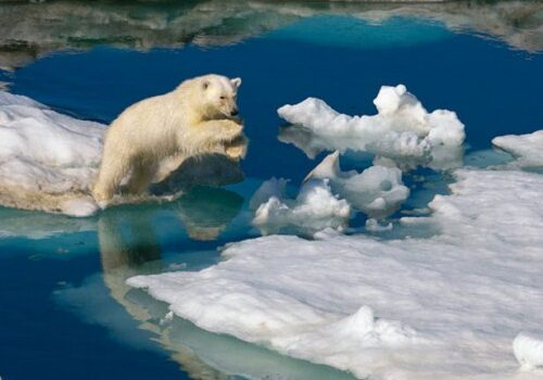 Svalbard, turismo de nieve y aventura en Noruega 6