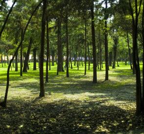 Bosque de Chapultepec, la zona cultural de Mexico DF 2