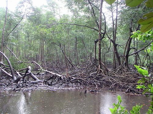 Naturaleza en República Dominicana 1
