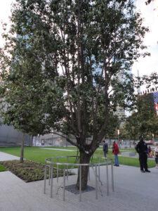 Arbol memorial 11S
